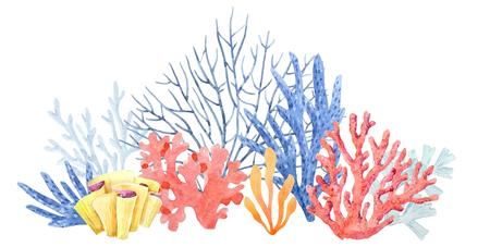 Composición coral acuarela Foto de archivo - 92682174