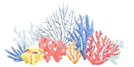 Watercolor coral composition Banco de Imagens