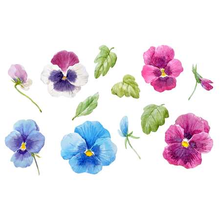 Beautiful vector set with watercolor hand drawn pansy flowers on transparent background Vettoriali