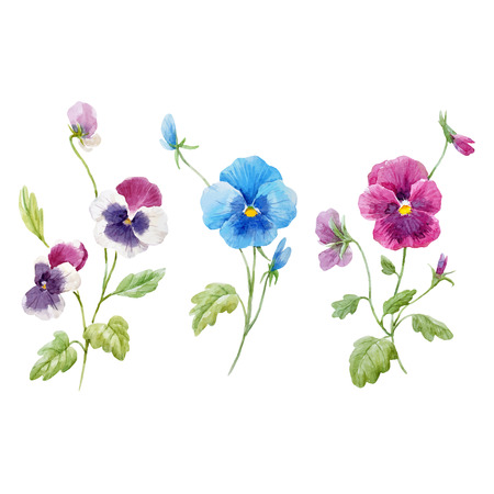 Beautiful vector set with watercolor hand drawn pansy flowers on transparent background Ilustracja