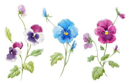 Aquarell Stiefmütterchen Blume Set Standard-Bild - 93545952