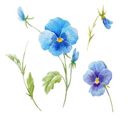 Aquarell Stiefmütterchen Blume Set Standard-Bild - 93468141