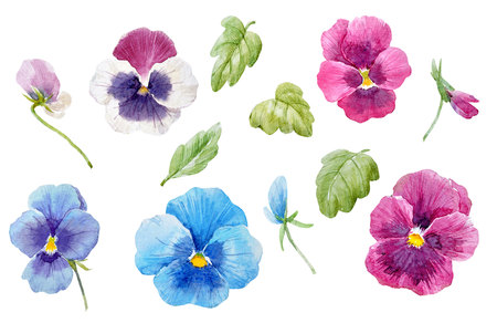 Watercolor pansy flower set