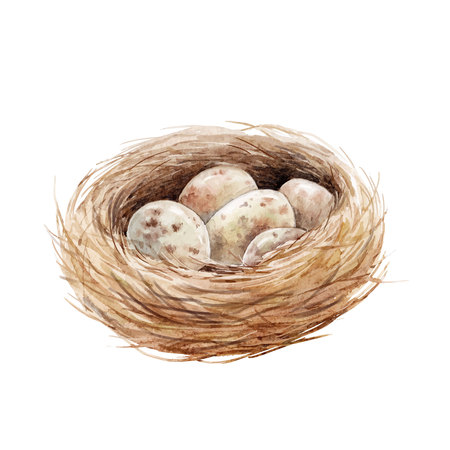 Watercolor bird nest with eggs illustration.