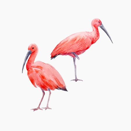 Watercolor ibis bird vector set