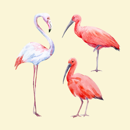 Watercolor ibis and flamingo vector set Illustration