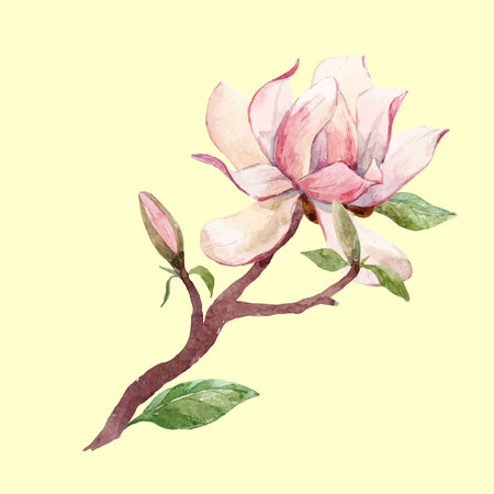 Watercolor magnolia floral vector composition