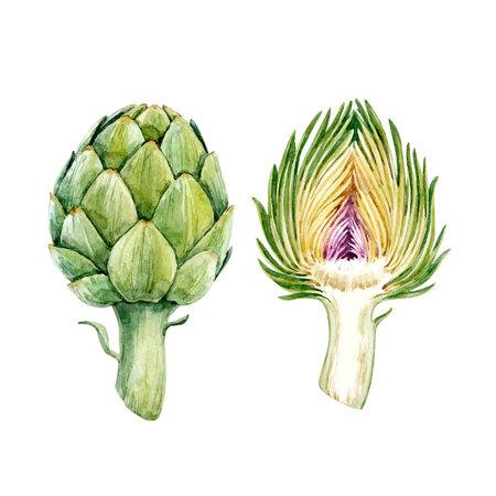Watercolor artichoke vector set