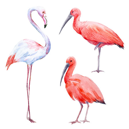 Watercolor ibis and flamingo set
