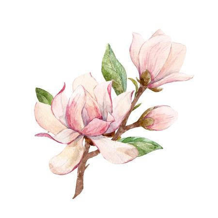 수채화 목련 꽃 조성 스톡 콘텐츠