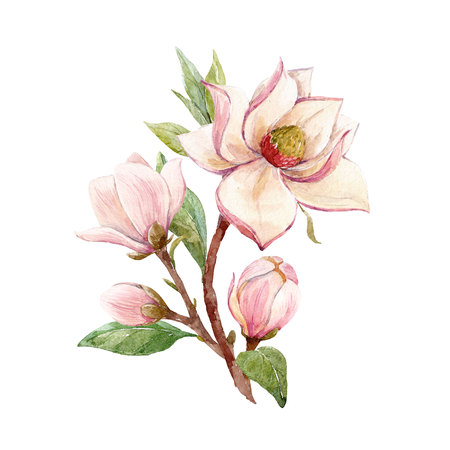 Watercolor magnolia floral composition Banco de Imagens