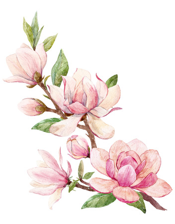 Watercolor magnolia floral composition Stock Photo