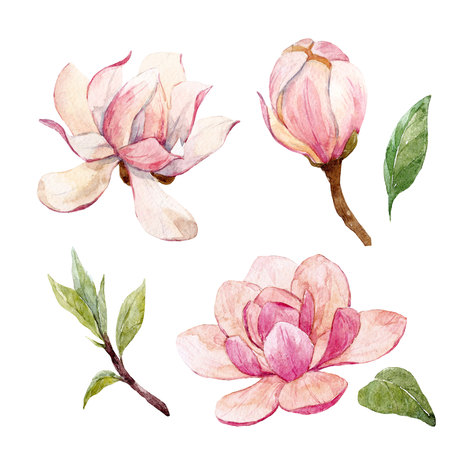 Watercolor magnolia floral composition 免版税图像