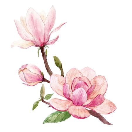 Watercolor magnolia floral composition Banque d'images