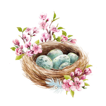 Watercolor bird nest with eggs