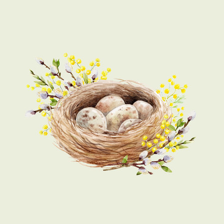 Watercolor bird nest with eggs Vector illustration. Ilustração