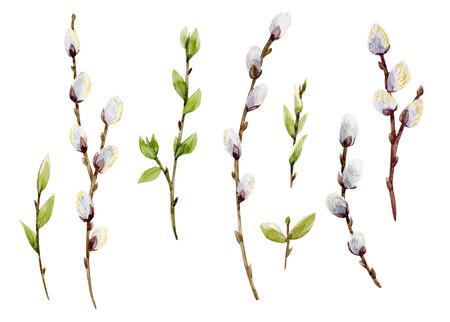 水彩柳の木セット