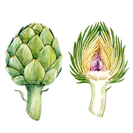 Watercolor artichoke set Stock Photo