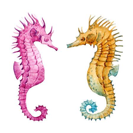 Watercolor sea horse set