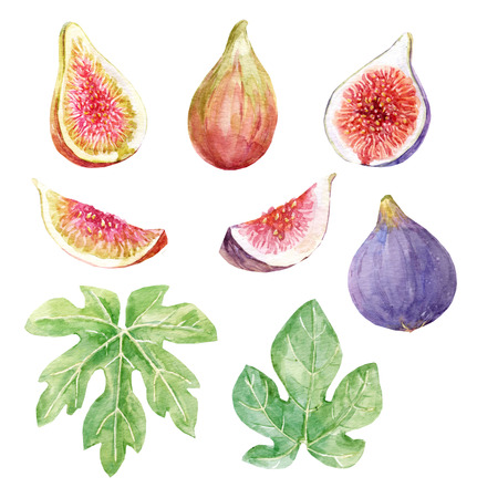 Watercolor fig set Banco de Imagens