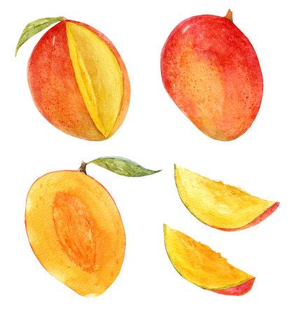 Watercolor mango set Imagens