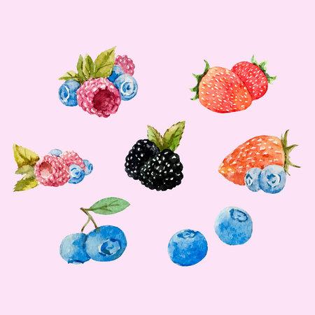 Watercolor berries vector set 일러스트