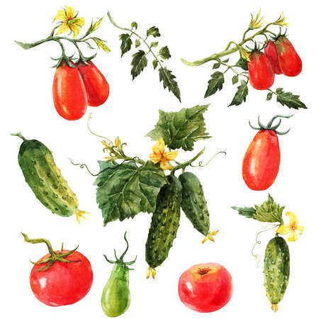 Watercolor tomato and cucumber set