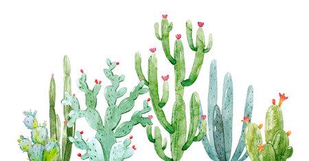 Akwarela kompozycja kaktusa