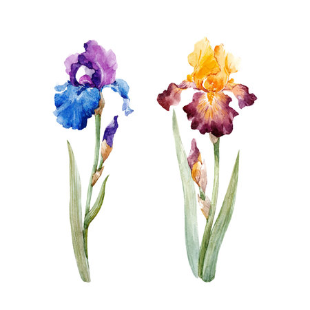 Watercolor iris vector set Ilustracja