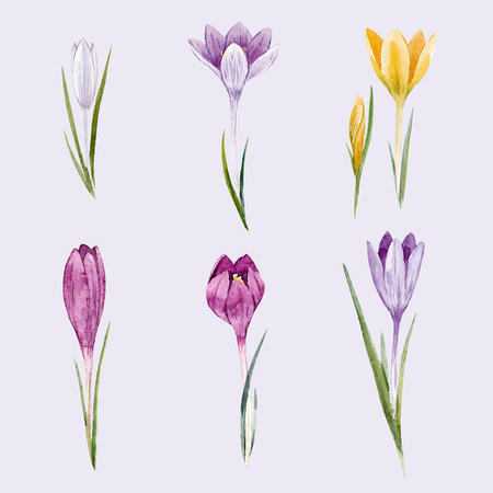 Watercolor floral crocus vector set Vettoriali