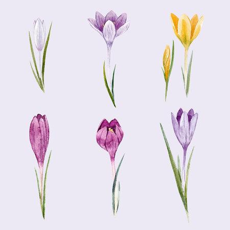 Watercolor floral crocus vector set Illustration