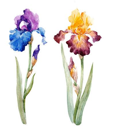 Watercolor iris set