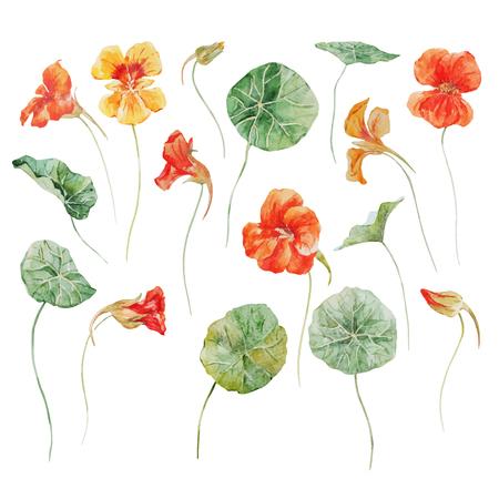 水彩花ベクトルセット