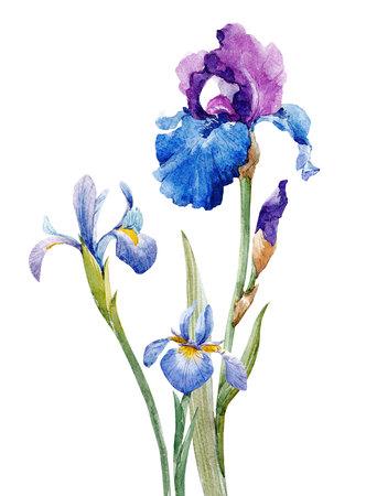Watercolor iris composition