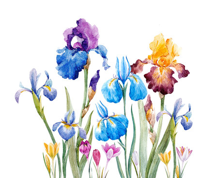 Watercolor iris composition