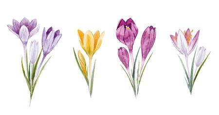 Watercolor floral crocus set Фото со стока
