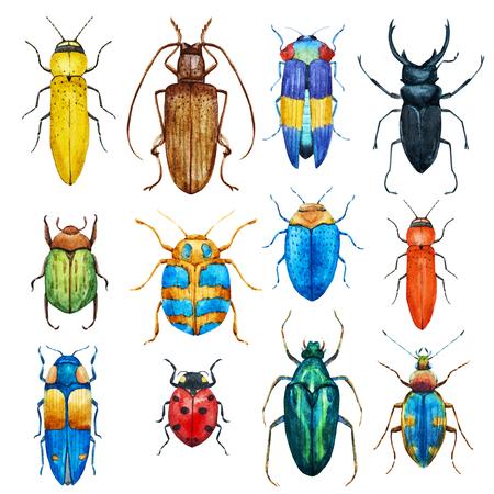 Watercolor beetles set