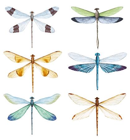 Watercolor dragonfly set 写真素材