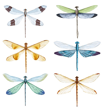 Watercolor dragonfly set Stock Photo