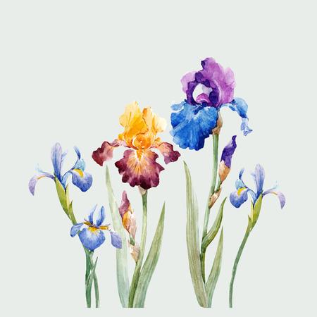 Watercolor iris vector composition