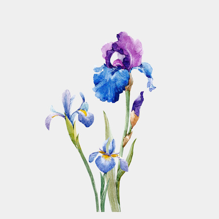 Aquarel iris vector samenstelling Stock Illustratie