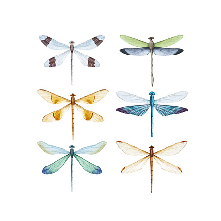 Watercolor dragonfly vector set.