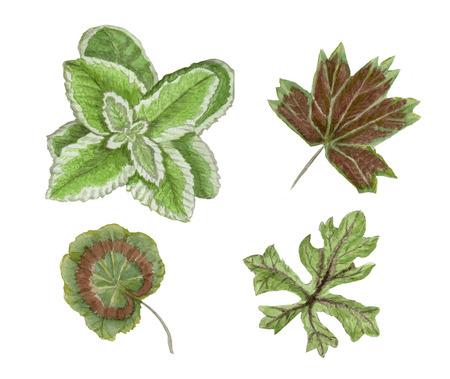 Watercolor leaves set Stok Fotoğraf - 98481559