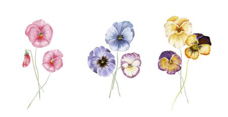 Aquarell Stiefmütterchen Blumen Standard-Bild - 98583249