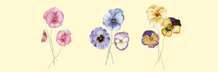 Beautiful vector set with hand drawn watercolor pansy flowers