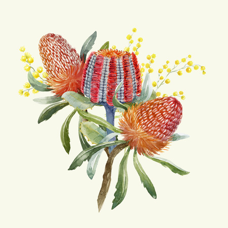Watercolor Australian banksia composition on colored illustration.