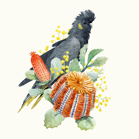 Watercolor australian banksia vector composition Illustration