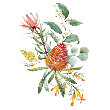 Watercolor australian banksia floral composition