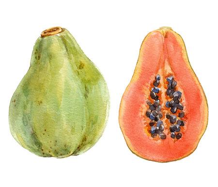 Watercolor papaya compasition