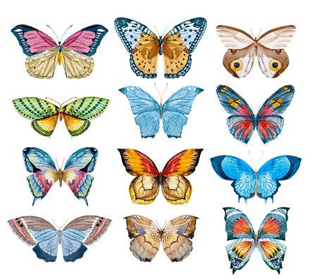 Watercolor butterfly set